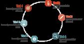 PowerPoint Vorlage: Prozess im Kreis